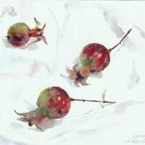 Granadillas